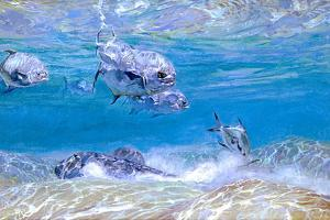 Jack Fish, Ray Fish and Permit Fish Mingle Above a Sandy Flat by Mike Rivken