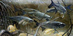 Tarpon Mingle in the Shallows as Stormy Weather Moves in Overhead by Mike Rivken