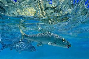 Two Bonefish in Blue Water Mirror Images of One Another by Mike Rivken