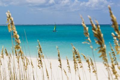 A Lone Sailboat in the Caribbean Sea Seen Through Tall Dune Grass by Mike Theiss