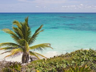 A Palm Tree on the Coast of the Yucatan Peninsula Near Tulum, Mexico by Mike Theiss