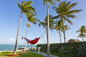 A Person Relaxing in a Hammock Strung Up Between Two Palm Trees by Mike Theiss