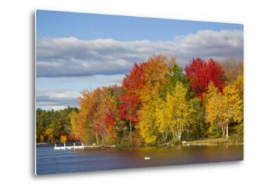 Brilliantly Colored Trees on a Lake Shore During Autumn
