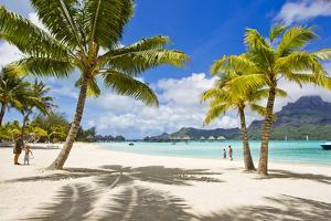 Palm Trees and their Shadows on Bora Bora's White Sand Beaches by Mike Theiss