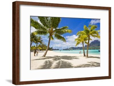 Palm Trees and their Shadows on Bora Bora's White Sand Beaches