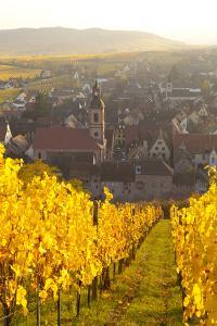 View of Riquewihr and Vineyards in Autumn, Riquewihr, Alsace, France, Europe by Miles Ertman
