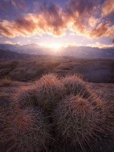 Barrel Cactus in the Alabama Hills at Sunset by Miles Morgan