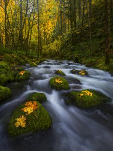 Fall in the Columbia River Gorge in Oregon by Miles Morgan