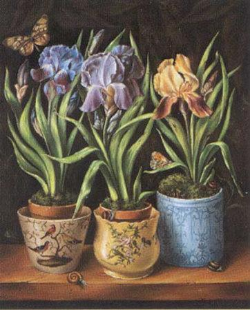 Pots with Narcissus