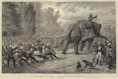 Military Amusements in Afghanistan, the Tug of War in the Camp at Gundamuk-Johann Nepomuk Schonberg-Giclee Print