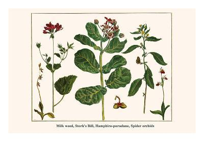 Milk Weed, Stork's Bill, Hamphire-Purselane, Spider Orchids-Albertus Seba-Art Print