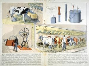 Milking Parlour Equipped with Thistle Suction and Pulsation Milking Machine, 1899