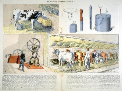 Milking Parlour Equipped with Thistle Suction and Pulsation Milking Machine, 1899--Giclee Print