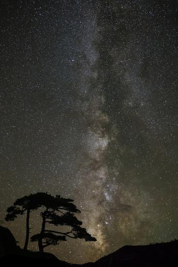 Milky Way and silhouetted tree, Ouray, Colorado-Adam Jones-Photographic Print