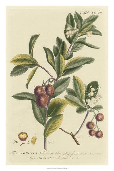 Miller Foliage & Fruit I-Phillip Miller-Giclee Print