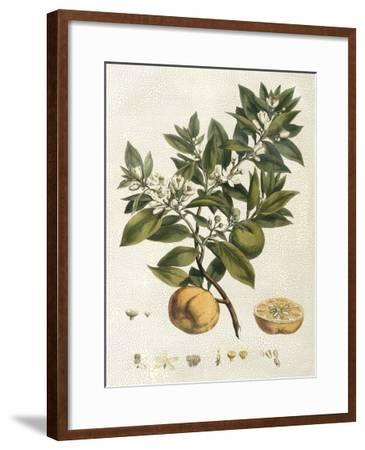Miller's Bounty I-John Miller (Johann Sebastien Mueller)-Framed Giclee Print