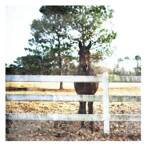 Horse Look by Milli Villa