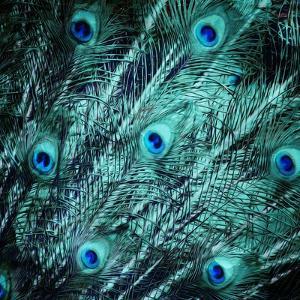 Peacock Spread by Milli Villa