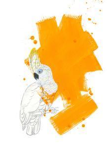 Cockatoo by Millie Brooks