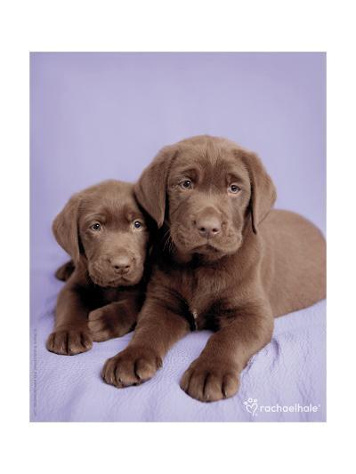 Milo and Choc-Rachael Hale-Photo
