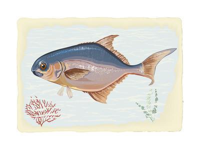 Pompano Fish on Retro Style Background
