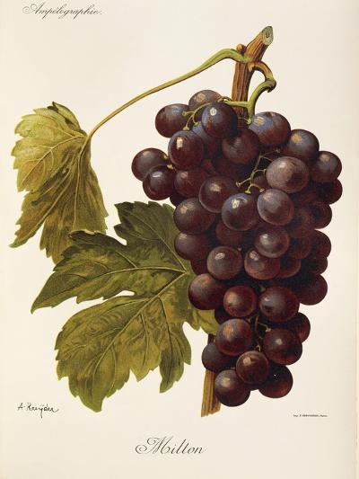 Milton Grape-J. Troncy-Giclee Print