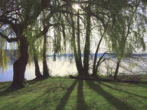 Seward Park by Mimi Payne
