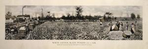Picking Cotton in GA 1915 by Mindy Sommers