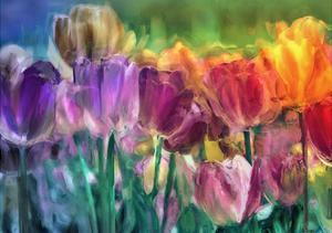 Tulip Farm by Mindy Sommers