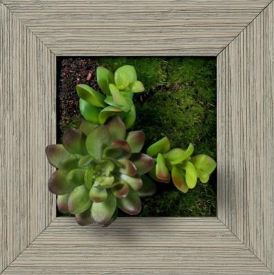 Mini Echeveria Jade Square - Farmhouse Gray