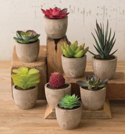 Mini Potted Succulent Set