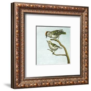 Mini Vintage Birds II-null-Framed Art Print