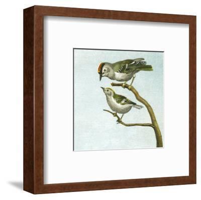 Mini Vintage Birds II--Framed Art Print