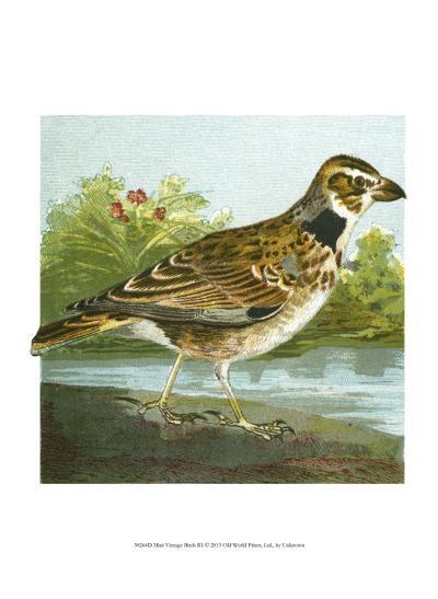 Mini Vintage Birds III--Art Print