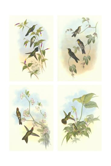 Miniature Gould Hummingbirds--Art Print