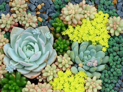 Miniature Succulent Plants-kenny001-Photographic Print