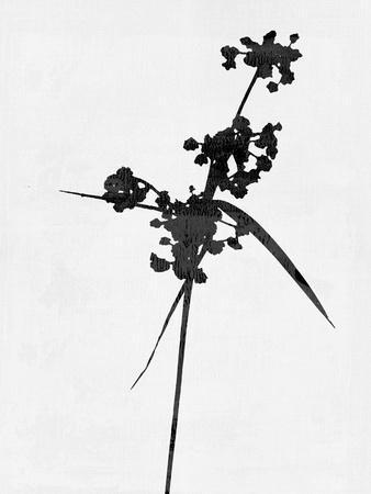 https://imgc.artprintimages.com/img/print/minimalist-black-wild-flower-iv_u-l-q1gvai60.jpg?p=0