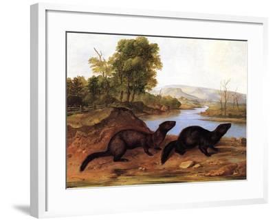 Minks, c.1848