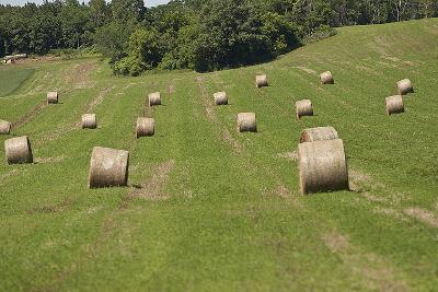 Minnesota. Dakota County, Rolled Bales of Hay in a Green Field-Bernard Friel-Photographic Print
