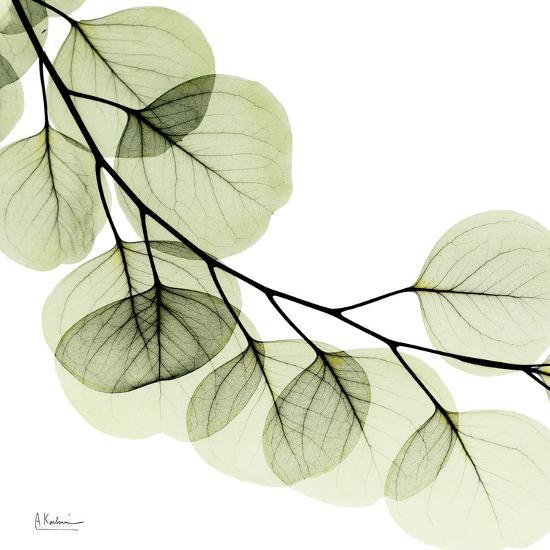 Mint Eucalyptus 2-Albert Koetsier-Art Print