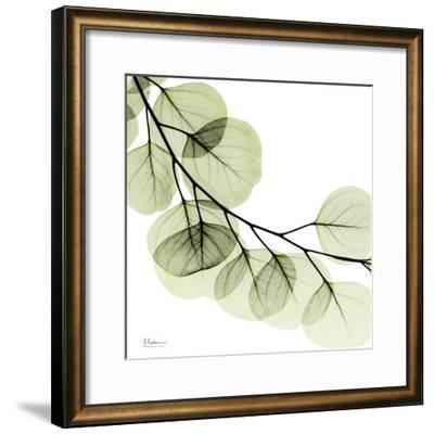 Mint Eucalyptus 2-Albert Koetsier-Framed Art Print