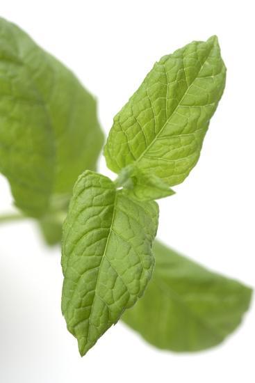 Mint Leaves-Jon Stokes-Photographic Print