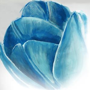 Mykonos Tulip Bloom by Miranda York