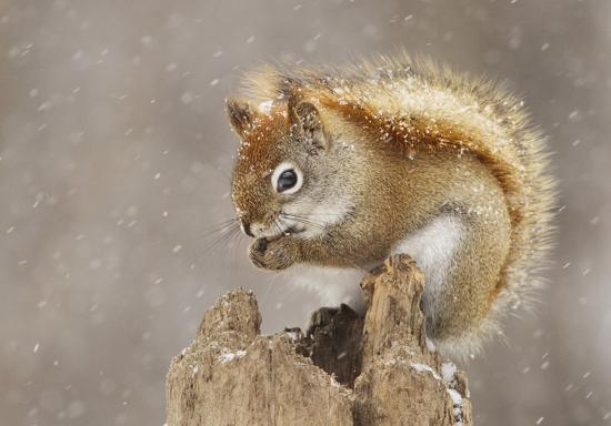 mircea-costina-snow-storm