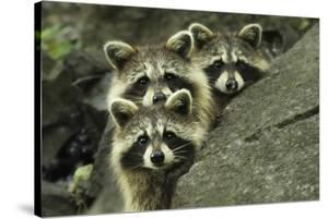 Tres Banditos by Mircea Costina