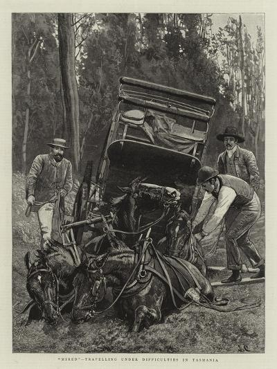 Mired, Travelling under Difficulties in Tasmania--Giclee Print