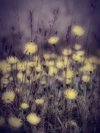 Yellow Floral Meadow