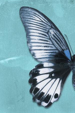 https://imgc.artprintimages.com/img/print/miss-butterfly-agenor-profil-turquoise_u-l-q19ncha0.jpg?p=0
