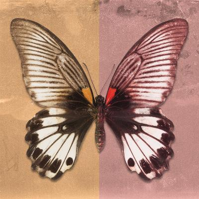 Miss Butterfly Agenor Sq - Orange & Red-Philippe Hugonnard-Photographic Print