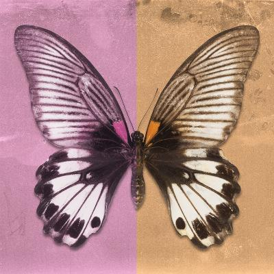 Miss Butterfly Agenor Sq - Pale Violet & Orange-Philippe Hugonnard-Photographic Print